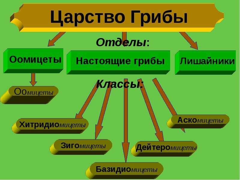 Царство грибов в схемах