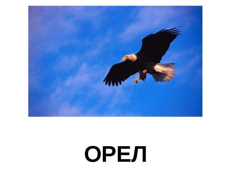 Презентация на тему орёл