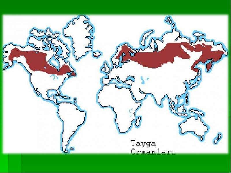Тайга где находится в россии