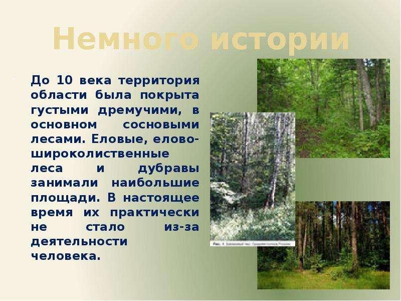 Немного истории До 10 века территория области была покрыта густыми дремучими, в основном сосновыми л