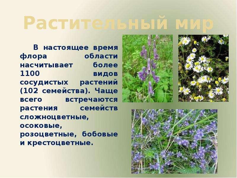 Растительный мир В настоящее время флора области насчитывает более 1100 видов сосудистых растений (1