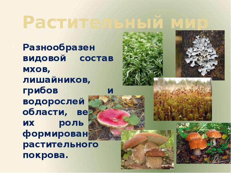 Растительный мир Разнообразен видовой состав мхов, лишайников, грибов и водорослей области, велика и