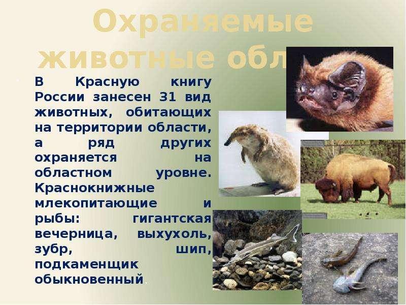 Охраняемые животные области В Красную книгу России занесен 31 вид животных, обитающих на территории