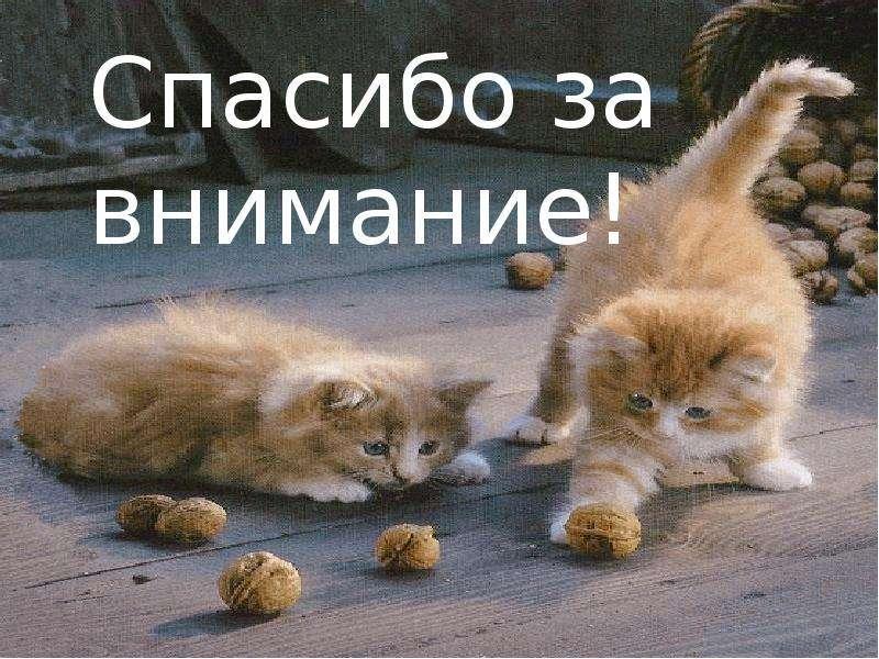 Картинка спасибо за внимание с котятами