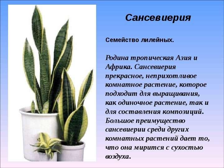Все комнатные цветы и характеристика