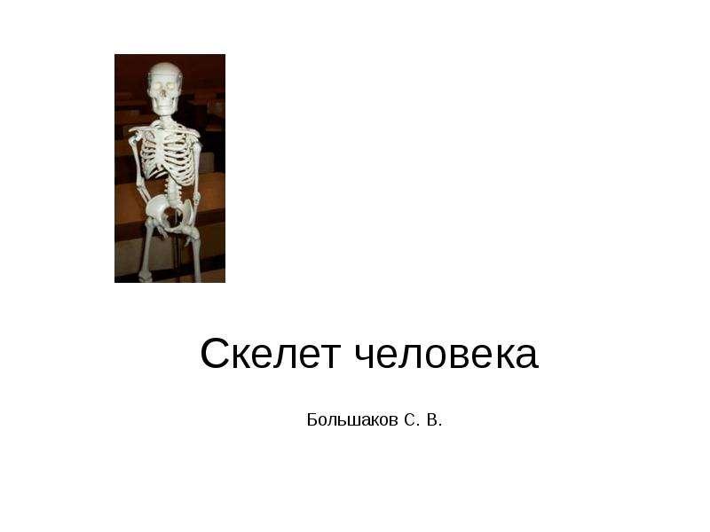 Презентация На тему Скелет человека