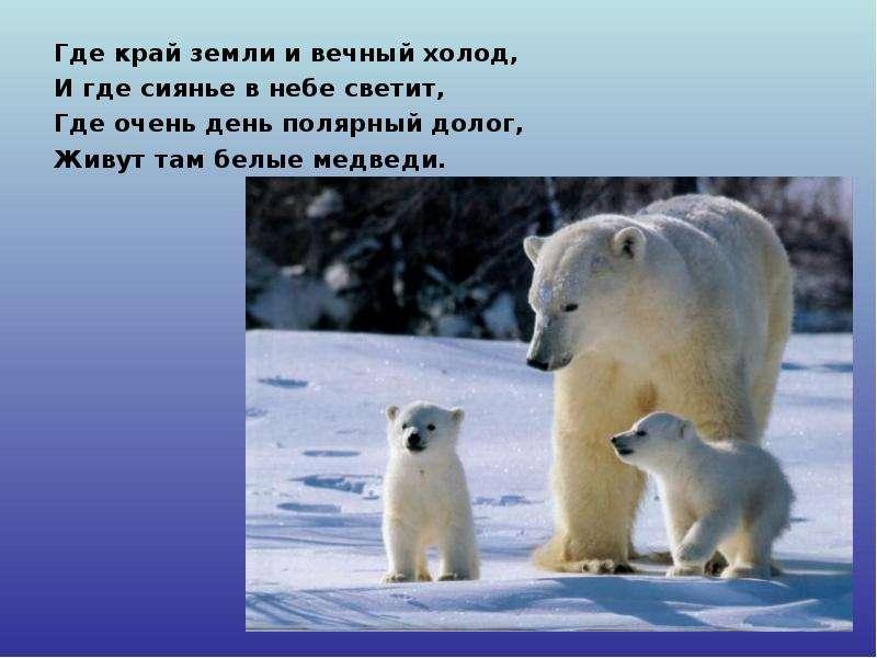 интернете нашла жив ли белый медведь приколы