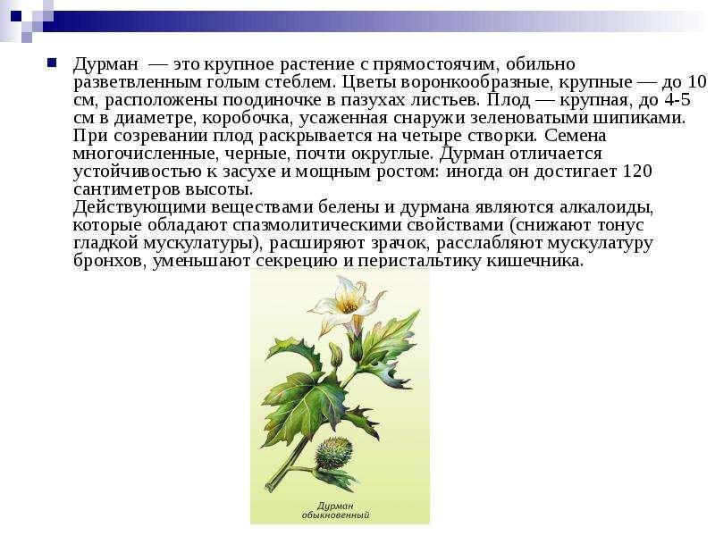 стихи трава дурман написали портреты хабаровских