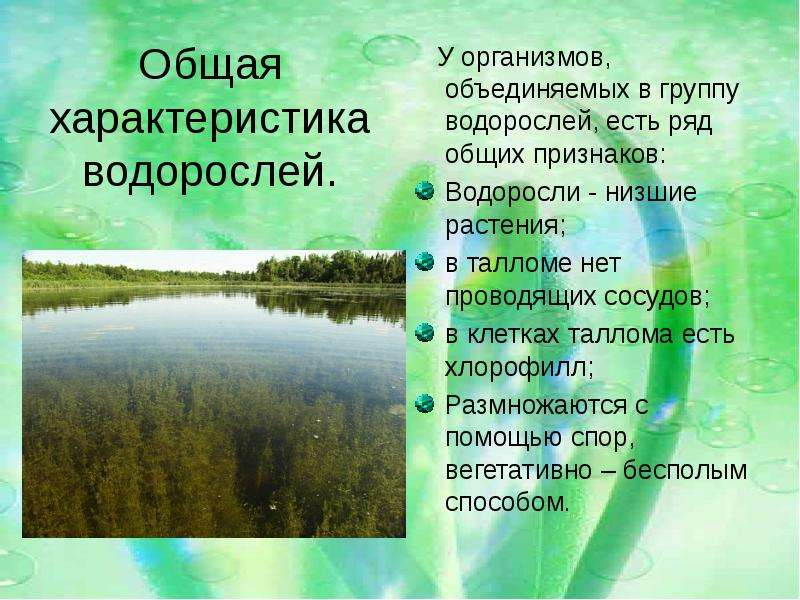Доклад на тему водоросли 7 класса