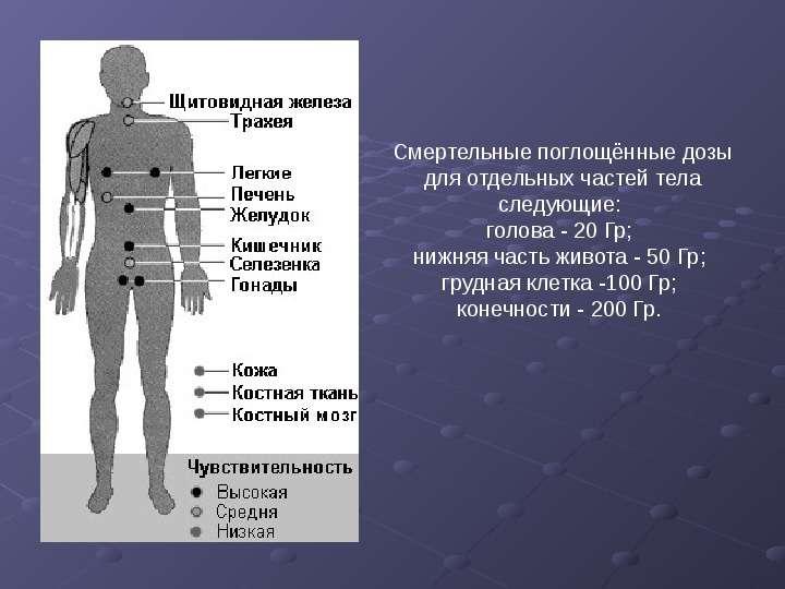 ИОНИЗИРУЮЩИЕ ИЗЛУЧЕНИЯ И РАДИАЦИОННАЯ ЗАЩИТА, слайд 14