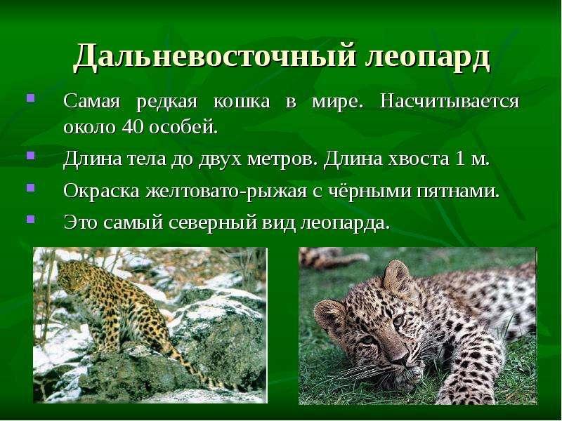 принцип красная книга о леопарде горнолыжник, сноубордист