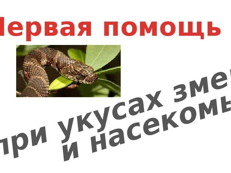Презентация Первая помощь при укусах змеи и насекомых