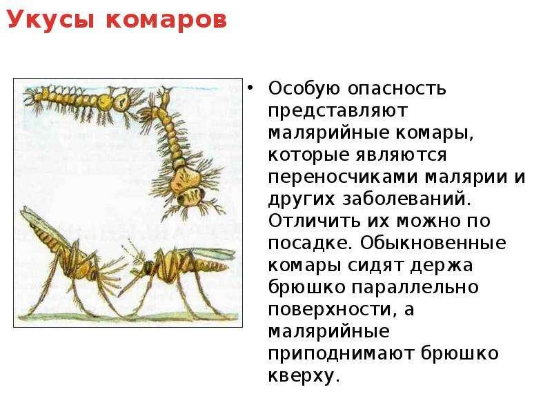 Особую опасность представляют малярийные комары, которые являются переносчиками малярии и других заб