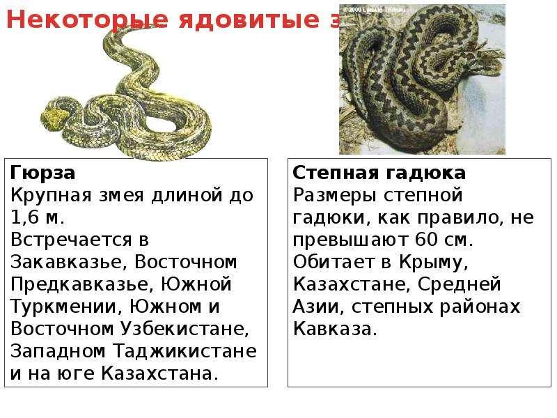 Первая помощь при укусах змеи и насекомых, слайд 3