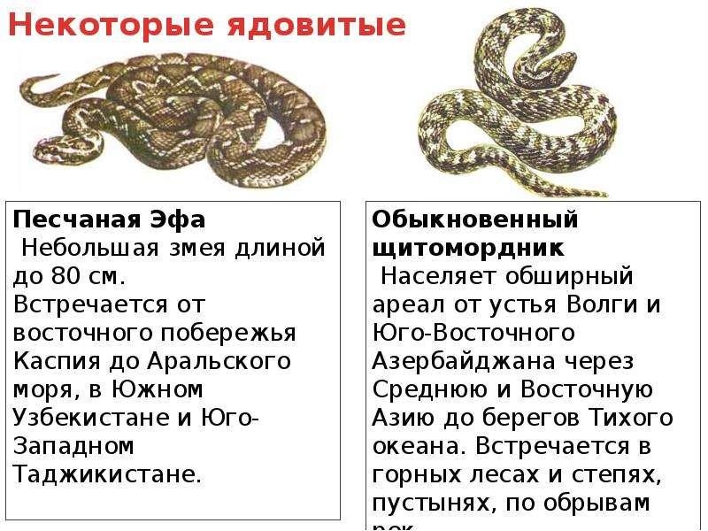 Первая помощь при укусах змеи и насекомых, слайд 4