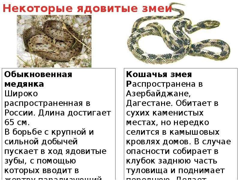 Первая помощь при укусах змеи и насекомых, слайд 5
