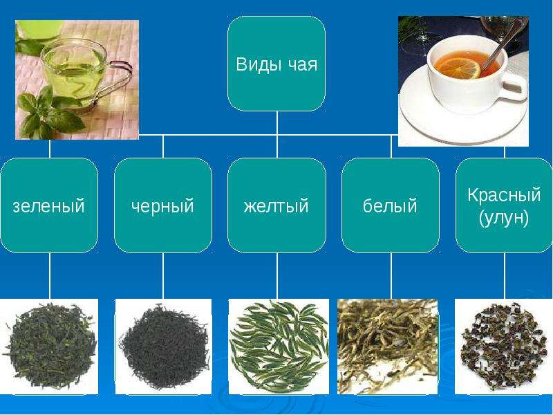 Презентация зеленого чая
