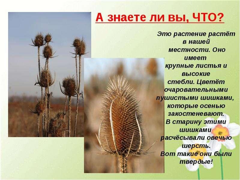 Презентации необычные растения