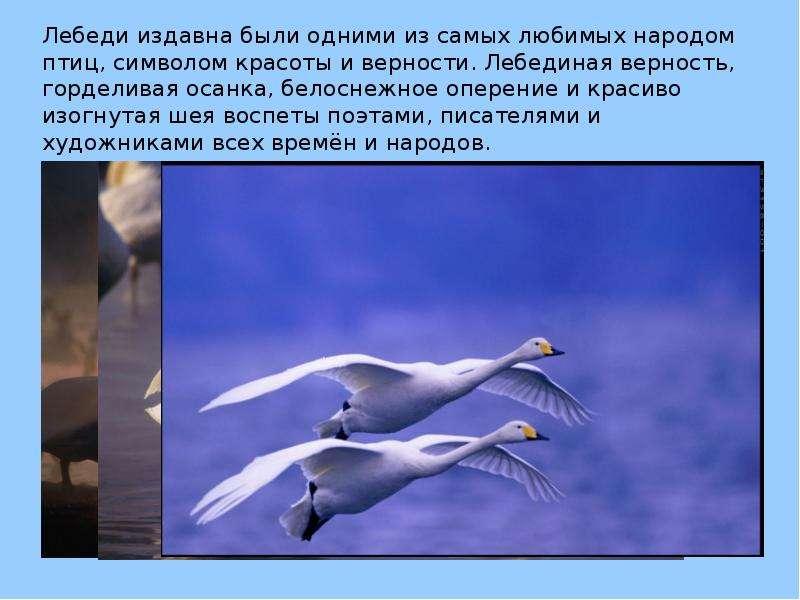 Поздравление на тему лебедь