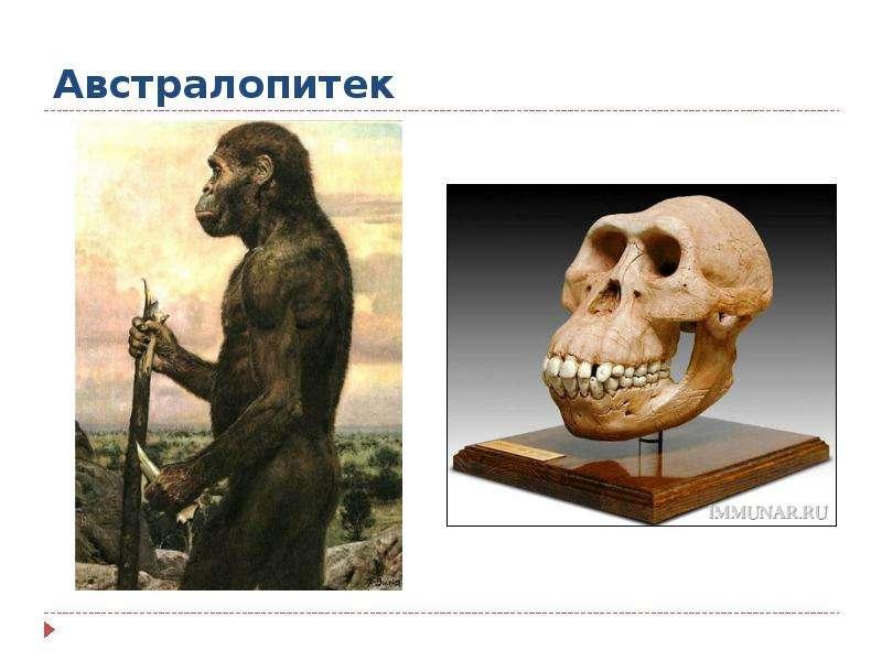 1 - австралопитек (australopithecus boisei), рост 100-160 см, объём мозга 300-570 куб см