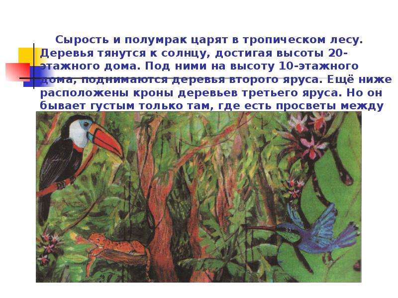 Сырость и полумрак царят в тропическом лесу. Деревья тянутся к солнцу, достигая высоты 20-этажного д