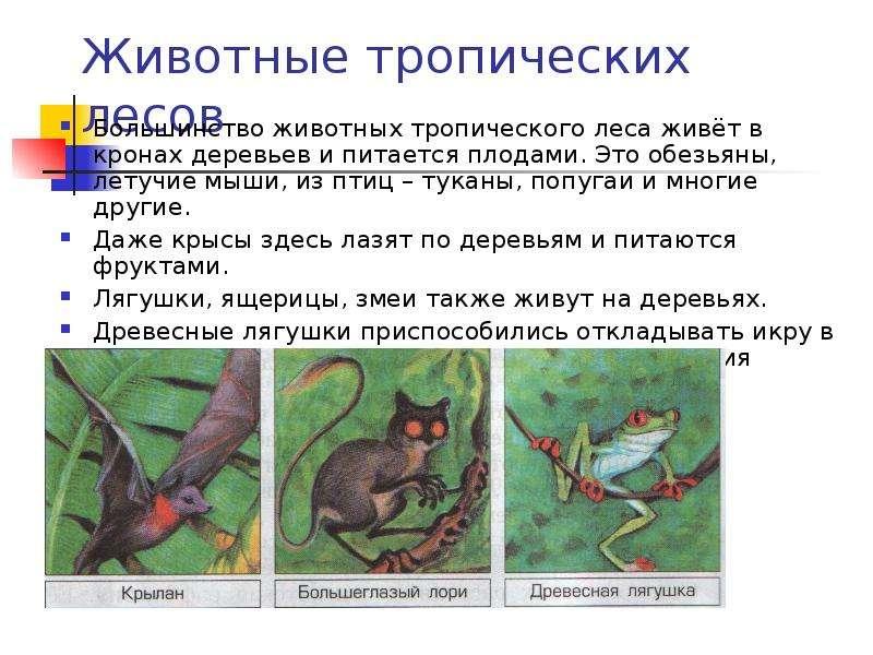 Животные тропических лесов Большинство животных тропического леса живёт в кронах деревьев и питается