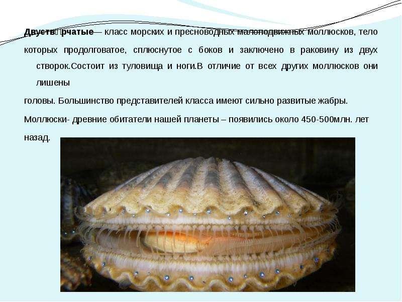 Интересные факты двустворчатых моллюсков