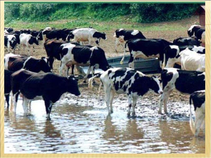 Механизация животноводства скачать книгу