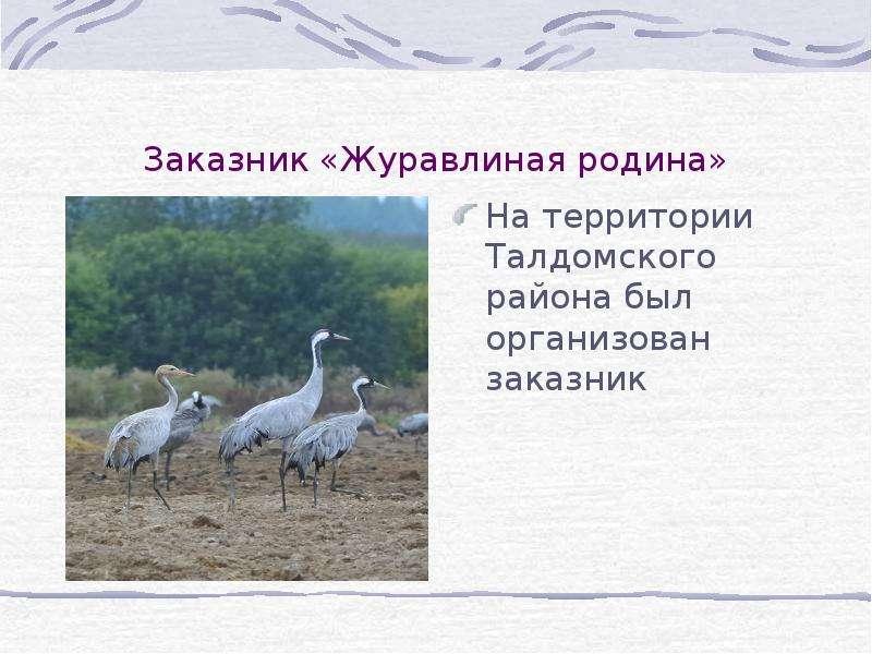 Заказник «Журавлиная родина» На территории Талдомского района был организован заказник