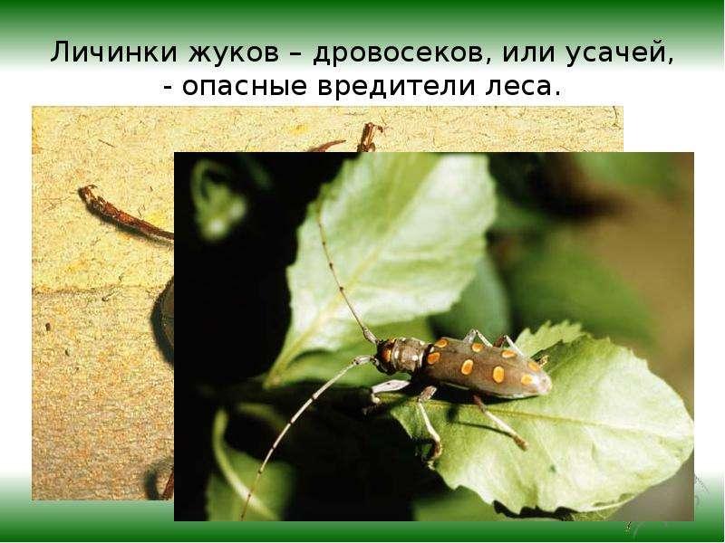 как среда обитания влияет на стволовых вредителей