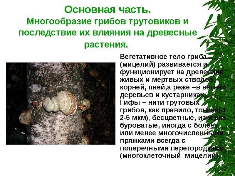 человек паразит земле