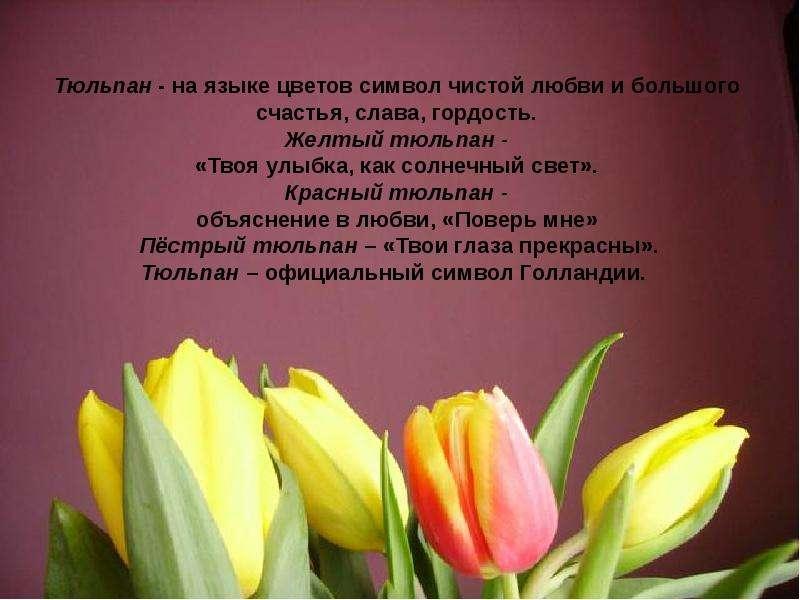 Цветы описание и тюльпаны