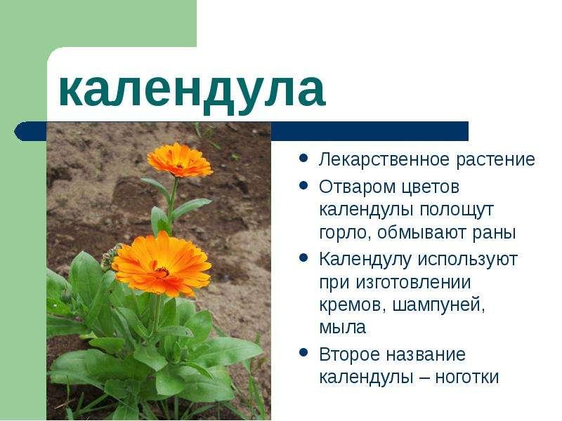 Все цветы мира и описание