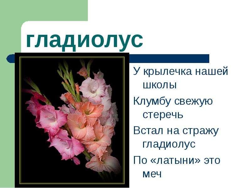 Стих про цветок на клумбе