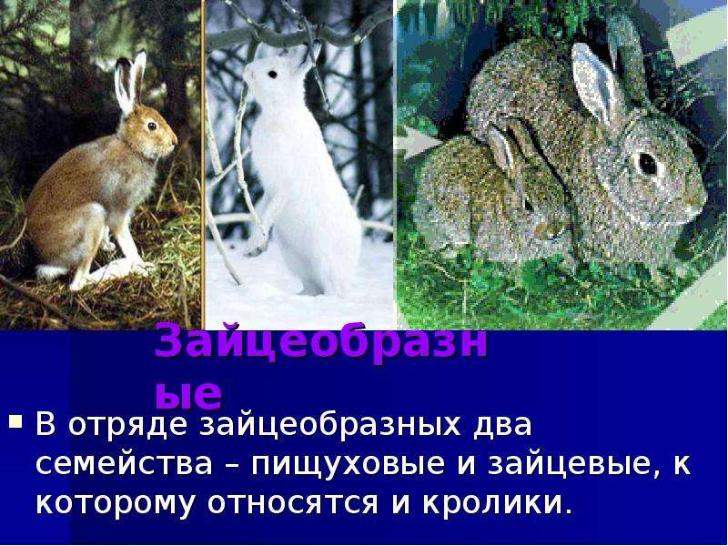 Определитеопределите определите, к каким подклассам относятся эти животные?