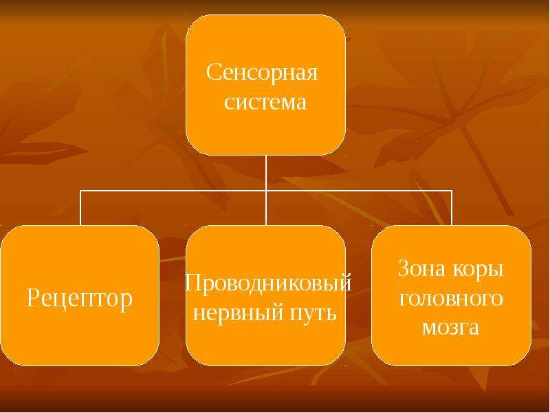 Сенсорные системы, слайд 13