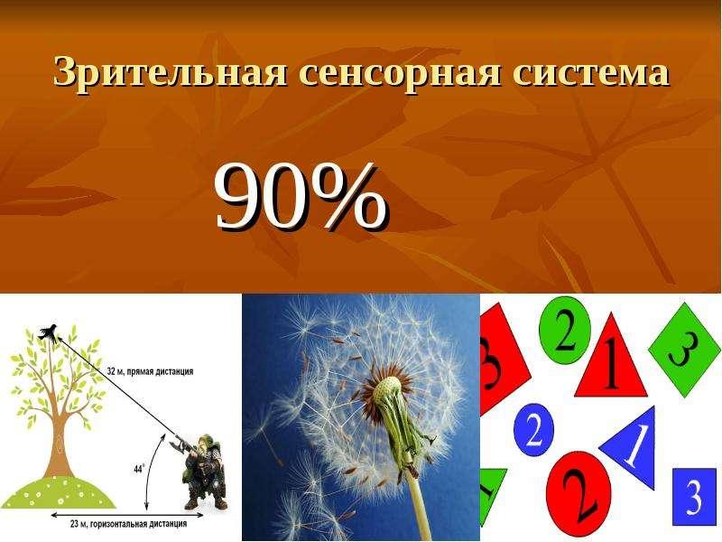 Зрительная сенсорная система 90%