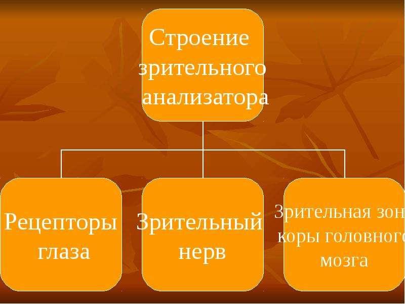 Сенсорные системы, слайд 16