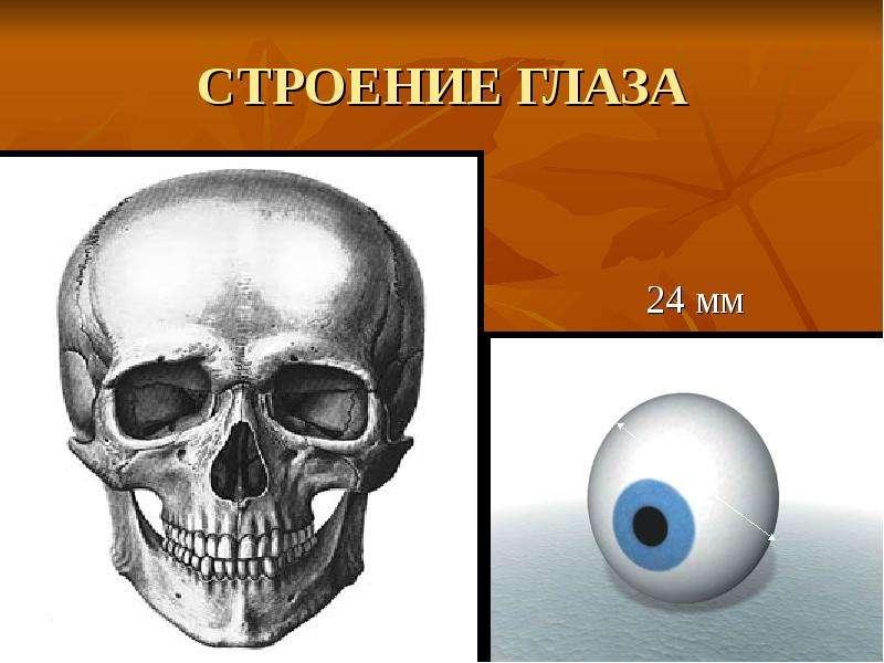 СТРОЕНИЕ ГЛАЗА 24 мм