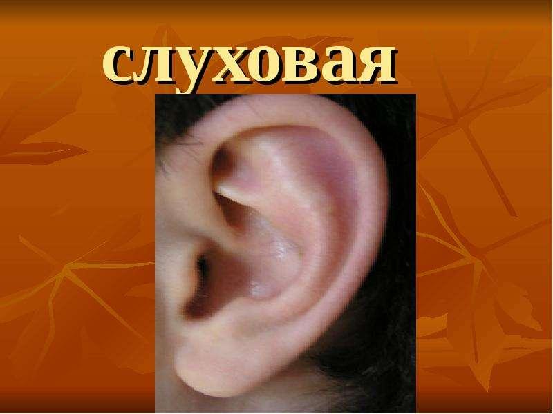 слуховая