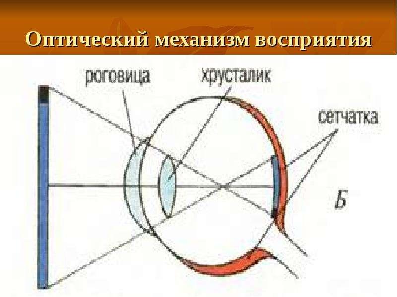 Оптический механизм восприятия