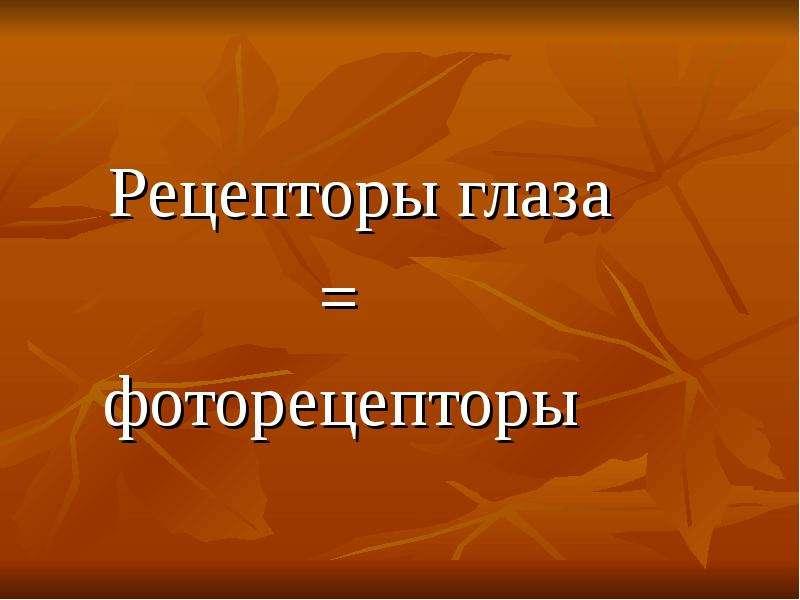 Рецепторы глаза = фоторецепторы