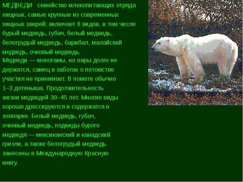 редкие животные евразии краткий разказ могу