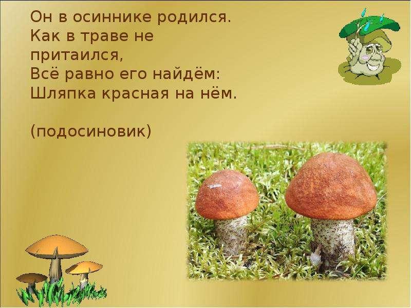 грибы загадки с картинками и ответами отличие своих коллег