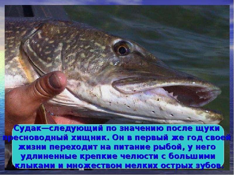 рыбалка пресной большой рыбы