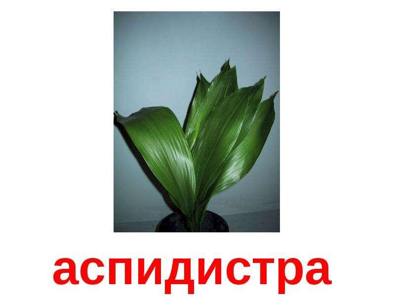 Комнатные растения картинки с надписями, марта нежные