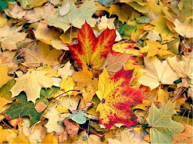 Картинка листья осенние шуршат