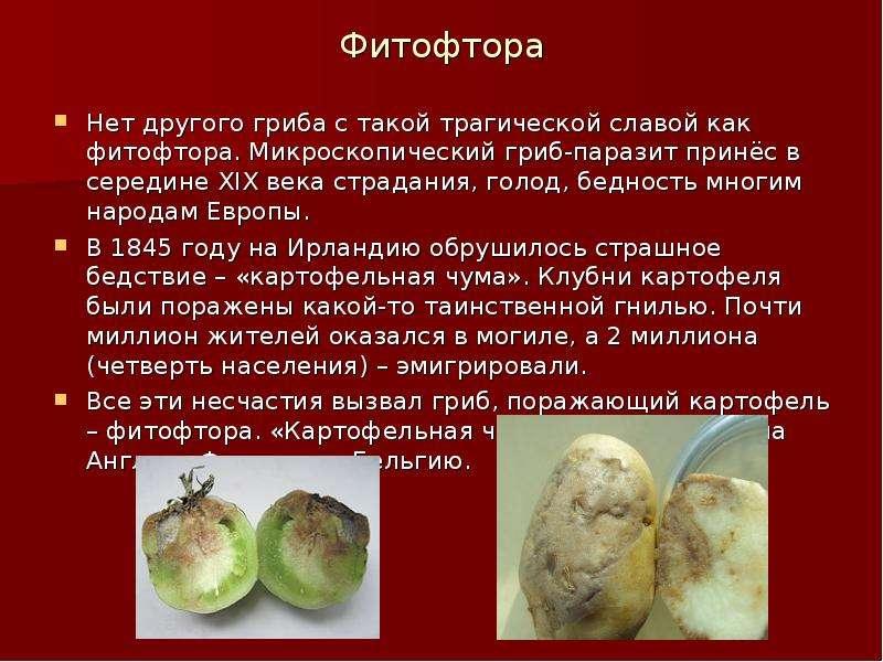 грибы паразиты в человеке вызывающие болезни