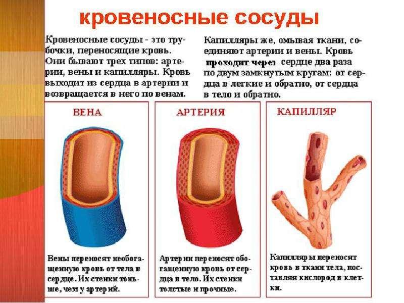 Enterococcus faecalis у мужчин простата