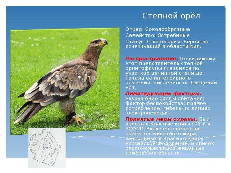 Хищные птицы тамбовской области